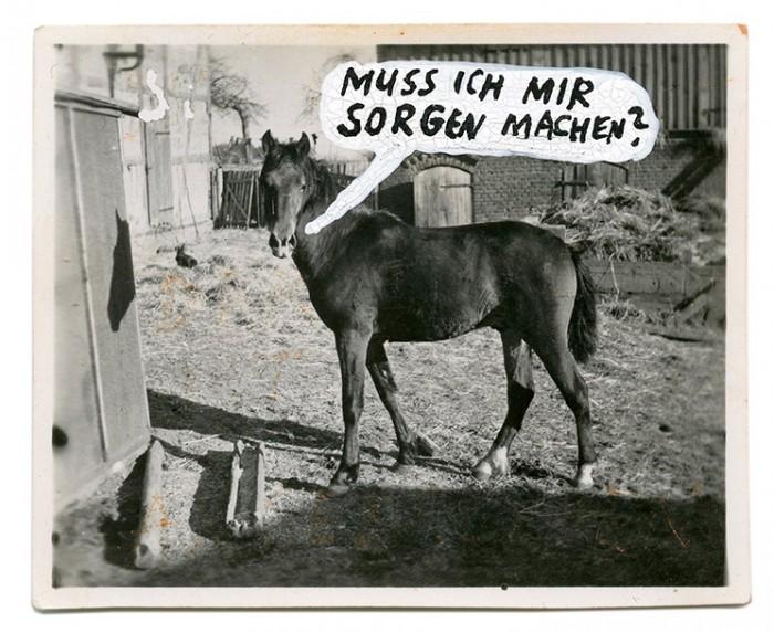 _pferd
