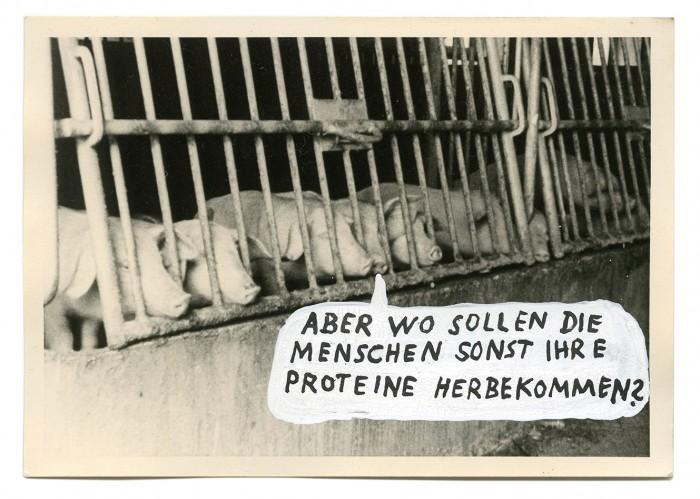 _schweine